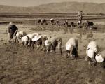 朝鲜族农业生产